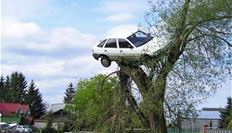 car on top of tree
